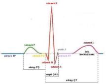 EKG. Schemat prawidłowej krzywej elektrokardiograficznej i jej elementów składowych