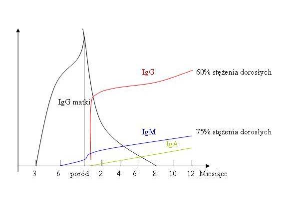 Zmiany poziomu przeciwciał dziecka w okresie okołoporodowym