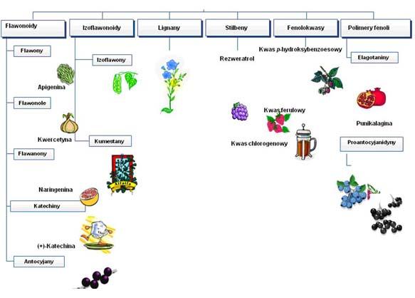 Rodzaje polifenoli występujących w owocach